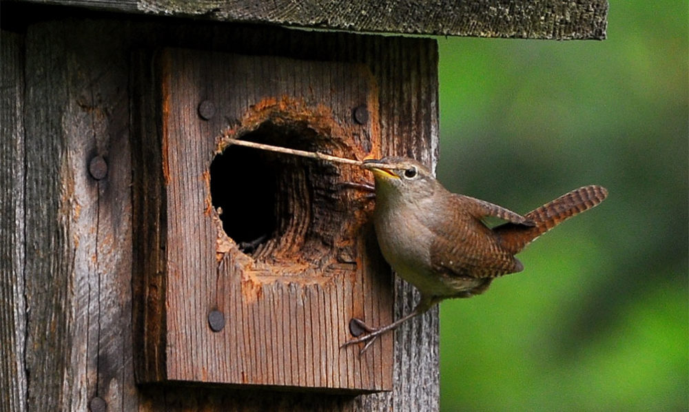 after the fires its ok to remodel like this darling bird bringing new twigs to birdhouse